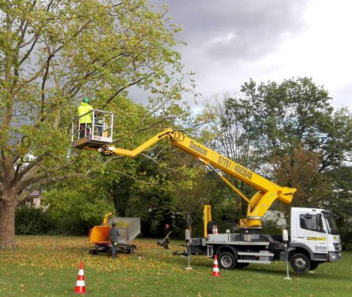 Stadtgärtner bei der Baumpflege. Verkehrssicherheit hat oberste Priorität.