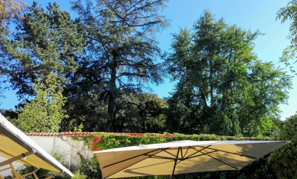 Der Providenzgarten vom Café Schafheutle aus gesehen